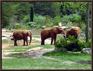 Elephants at Asheboro Zoo