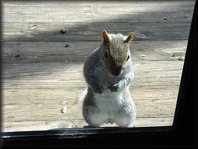 Let Me In! & Squirrels at Nature Haven