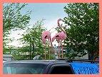 Flamingos on Top